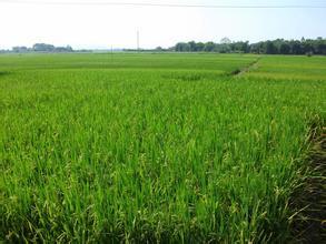 稻田物联网管理
