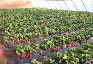 草莓农业物联网系统