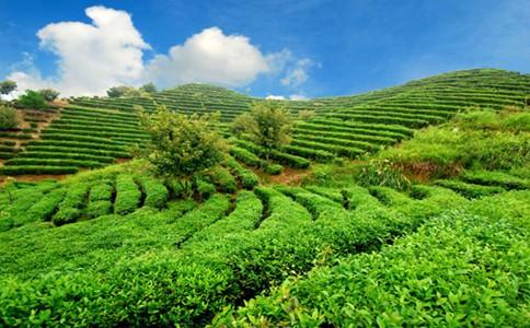 智慧农业就是把物联网技术运用到传统农业生产